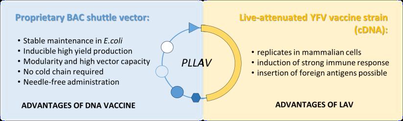 PLLAV2